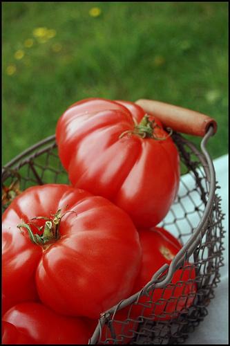 Lundi 2 juillet 2012 dans Le mot de la Ferme tomatespanier