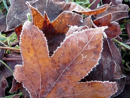 Lundi 5 novembre 2012 dans Le mot de la Ferme gelee-blanche-automne